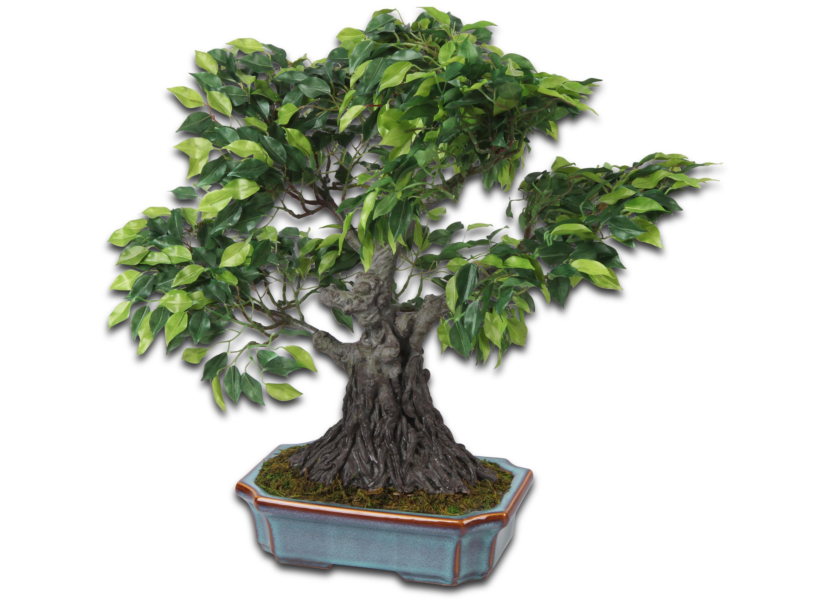 Fikus bonsai kunstbaum pflanzen for Bonsai pflanzen