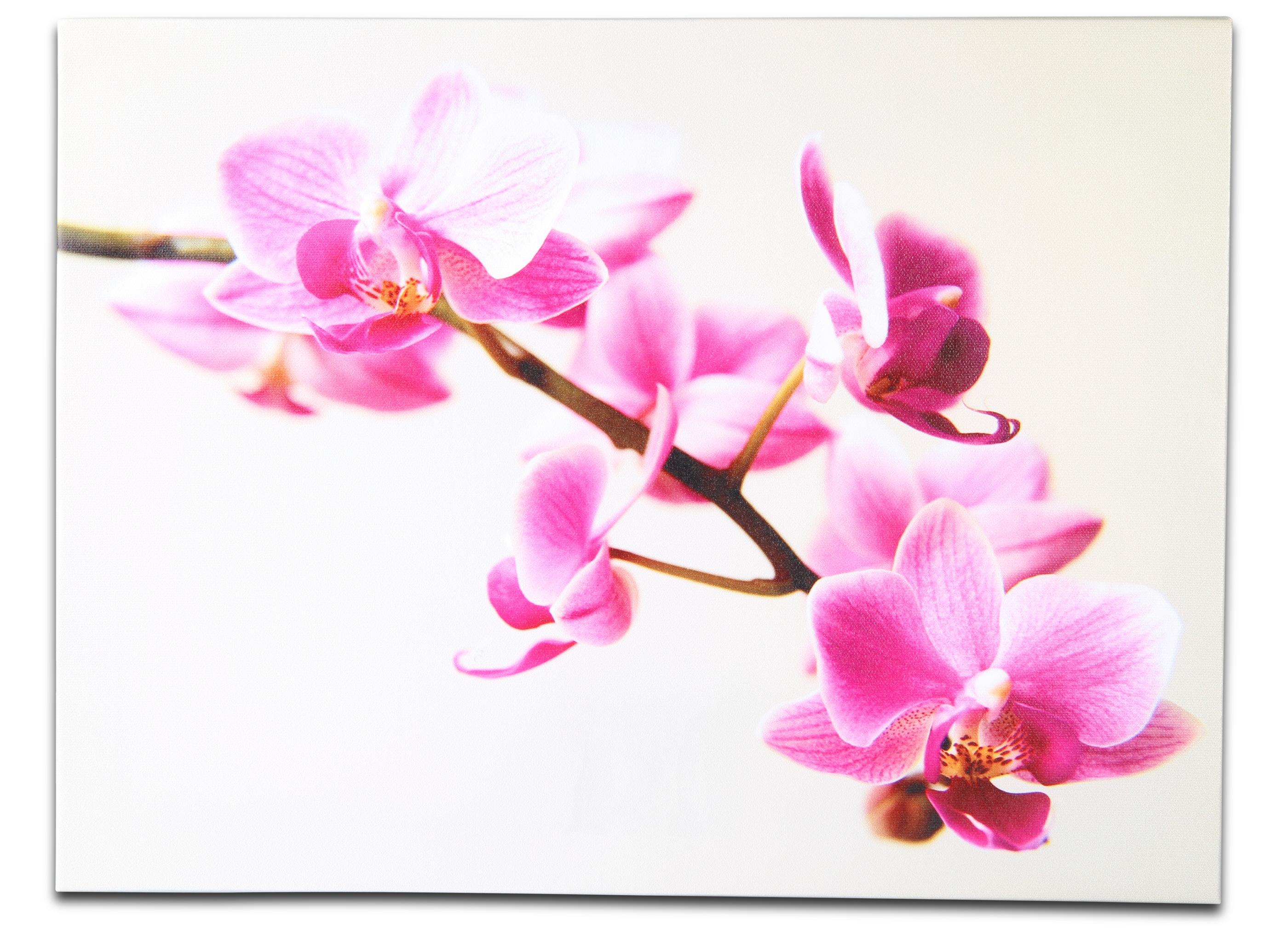 Led Beleuchtung Orchideen : LED Bild Orchideen  Dekoration