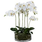 XXL-Orchidee in Glasschale, ca. 70 cm - 100065500000 - 1 - 140px