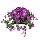 Petunie hängend im Blumenkasten lila - 100201900000 - 1 - 140px