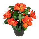 Hibiskus orange im Kunststofftopf - 100204400000 - 1 - 140px