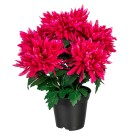 Chrysantheme pink im Kunststofftopf - 100205000000 - 1 - 140px