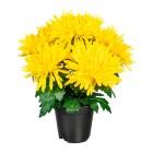Chrysantheme gelb im Kunststofftopf - 100205200000 - 1 - 140px
