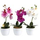 Orchideen 3er-Set 24cm - 100277500000 - 1 - 140px