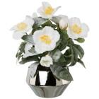 Christrose weiß gefrostet, Silberschale - 100391000000 - 1 - 140px