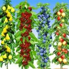 Säulen-Obst-Kollektion, 4 Pflanzen - 100487500000 - 1 - 140px