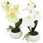 Orchideen 2er Set, weiß + gelb, 27 cm