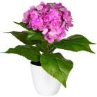 Hortensie, pink, 40 cm, realtouch - 100578700000 - 1 - 140px