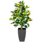Orangenbäumchen im Dekotopf, 70 cm - 100581500000 - 1 - 140px