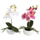 Orchidee 2er Set, fuchsia-weiß - 100748000000 - 1 - 140px
