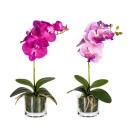 Orchidee 2er-Set, lila-flieder