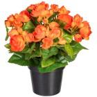 Begonienbusch orange, 28 cm - 100915700000 - 1 - 140px