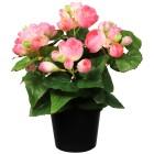 Begonienbusch rosa 28cm - 100915800000 - 1 - 140px
