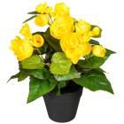 Begonienbusch gelb 24cm - 100925200000 - 1 - 140px