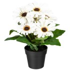 Gerberabusch weiß 27cm - 100925500000 - 1 - 140px