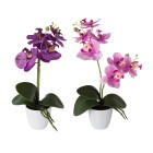 Orchidee 2er Set, lila/pink - 101296700000 - 1 - 140px