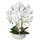Orchidee weiß-grün 66cm in Keramikschale - 101600000000 - 1 - 140px