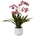 Gambia-Orchidee ca. 57 cm, rosa - 101601000000 - 1 - 140px