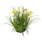 Frühlingsmix im Erdballen, gelb/weiß, ca. 30 cm - 101649100000 - 1 - 140px