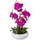 Orchideen-Arrangement lila, in Keramikschale - 101649500000 - 1 - 140px