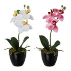 Orchidee weiß-rosé 2er Set, real-touch - 101721600000 - 1 - 140px