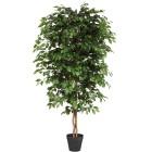 Ficus Benjamini, 120 cm - 101796200000 - 1 - 140px