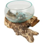 Darimana Glasschale auf Kaffeewurzel - 101937400000 - 1 - 140px