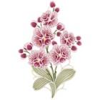 Plauener Spitze Fensterbild Orchidee