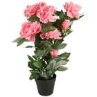 Peonie rosa, 65 cm - 102735300000 - 1 - 140px