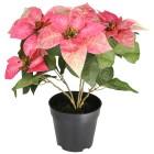 Weihnachtsstern rosa 47cm - 103191400000 - 1 - 140px