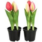 Tulpe im Topf pink, 2er Set - 105010800000 - 1 - 140px