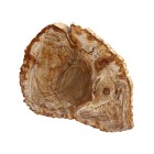 Versteinerte Holzscheibe mit Acryl-Ständer - 68231100000 - 1 - 140px