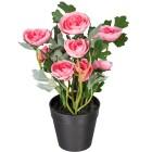 Ranunkel rosa, ca. 25 cm