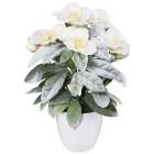 Christrosenbusch im Topf, weiß, 30 cm - 68370400000 - 1 - 140px