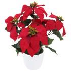 Weihnachtsstern im Topf, rot - 68370700000 - 1 - 140px