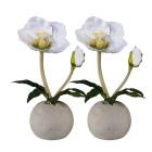 Christrose weiß, 2er Set - 68370900000 - 1 - 140px