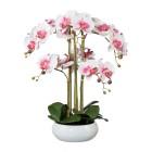 XXL Orchidee in der Keramikschale 53 cm - 68382500000 - 1 - 140px