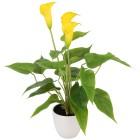 Kunstblume Calla gelb, ca. 40 cm - 68383900000 - 1 - 140px