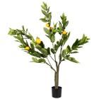 Zitronenbaum im Topf, 120 cm - 68411900000 - 1 - 140px