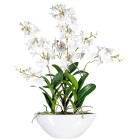 Orchidee Dendrobie in Keramikschale, weiß, 60 cm - 68419900000 - 1 - 140px