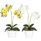 Orchideen, grün und weiß, 50 cm, 2er-Set