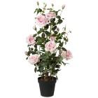 Rosenstock rosa, 112 cm - 68440600000 - 1 - 140px