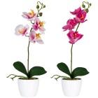 Orchideen im Keramiktopf, rosa/fuchsia, 2er Set - 68440800000 - 1 - 140px