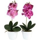 Orchideen im Keramiktopf, lila/flieder, 2er Set - 68470600000 - 1 - 140px