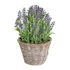 Lavendelbusch im Weidenkorb, 35 cm - 68488600000 - 1 - 140px
