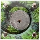 Chamäleon Auge Real Eye Silbermünze