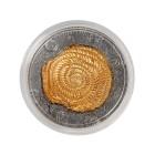 Nummulites Silbermünze