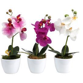 Orchideen 3er-Set 24cm