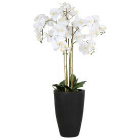 XXL-Orchidee 105 cm, weiß