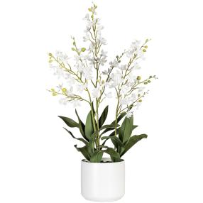 Orchidee Dendrobie 70 cm